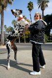 Världens hösta hund på två ben